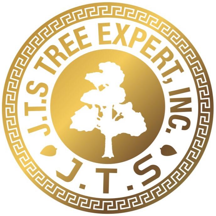 jts tree expert